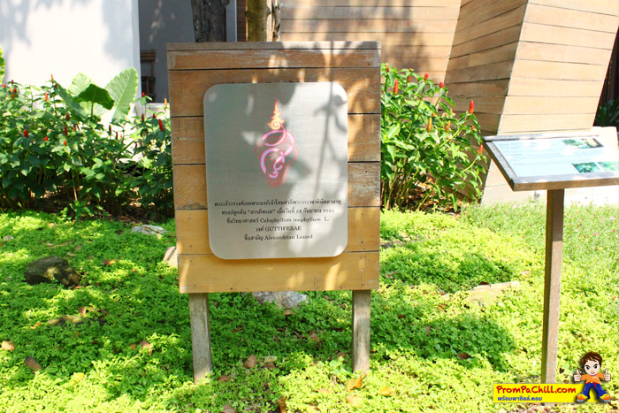 Review Sai Kaew Beach Resort